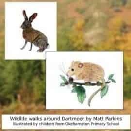 Family Friendly Walks with Dartmoor's Adventurous Animals