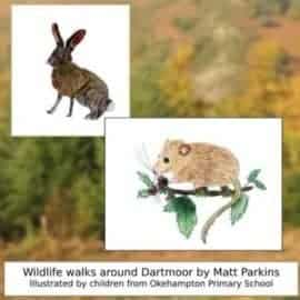 Family Friendly Walks with Dartmoor's Adventurous Animals