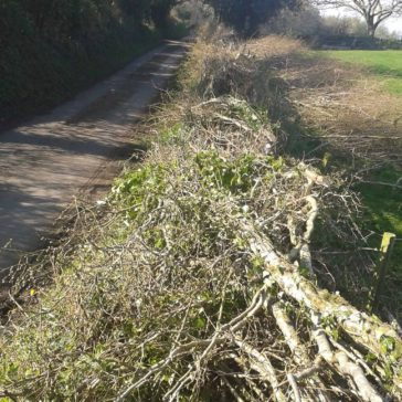 Chris Townshend – Traditional Hedgelaying | New Website Partner